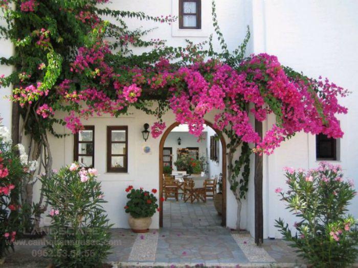 Thiết kế giàn hoa cho sân vườn thêm thơ mộng