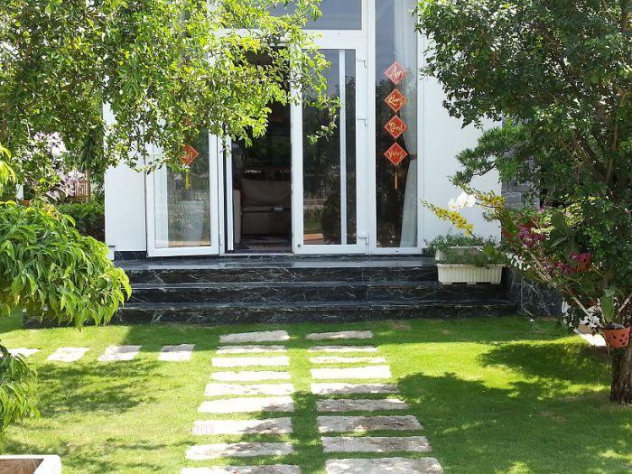 Thảm cỏ lông heo trong sân vườn