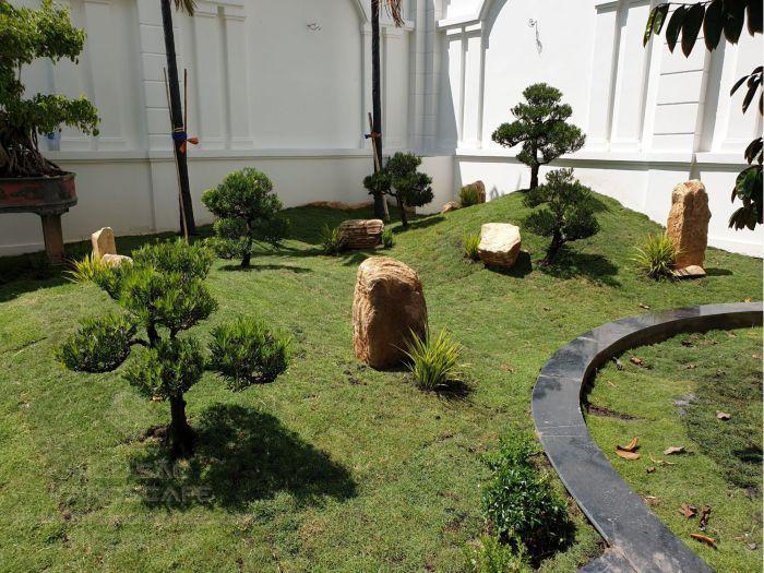 Đồi cỏ tùng la hán sáng trọng trong sân vườn