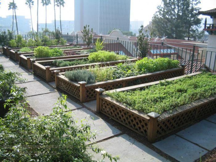 Ý tưởng thiết kế vườn trồng rau tại sân vườn