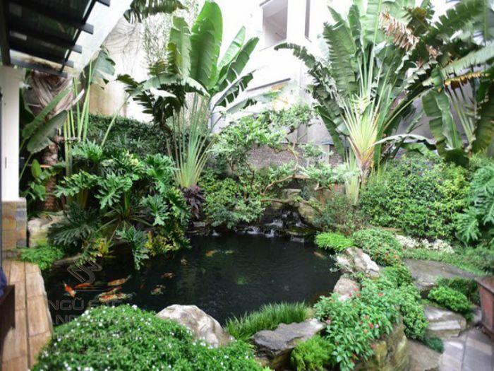 Cây trầu bà chân vịt thường được chọn để trồng hồ cá Koi