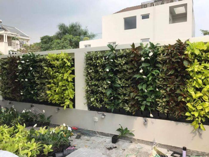 Tận dụng tường rào thiết kế tường cây xanh đẹp mắt