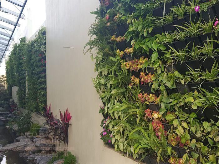 Tiểu cảnh tường cây xanh bên hông nhà