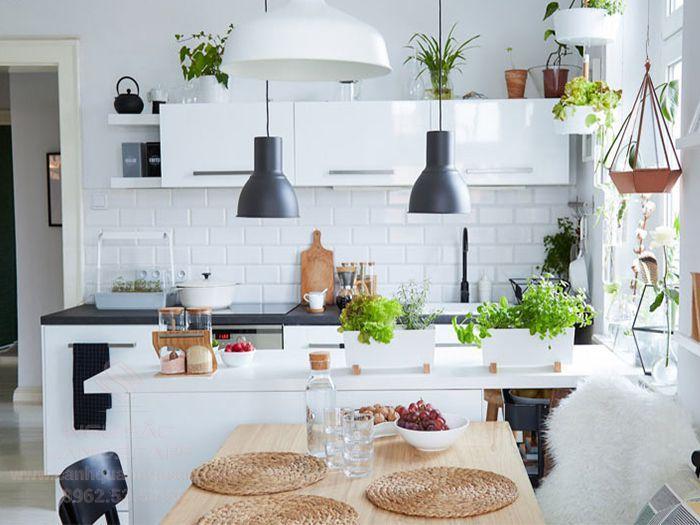 Đặt cây cảnh trong nhà bếp giúp trung hòa năng lượng lửa - nước