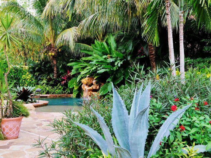 Những loại cây trồng trong vườn nhiệt đới